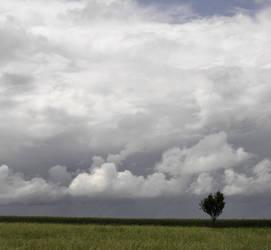 drzewko chmurki i trawka by AlcohollicA