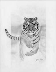Snow Tiger by powerman5thousand