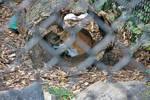 Foxy hiding spot by PudgeyRedFox