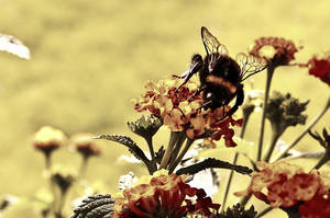 Bumble-Bee by Jibril85