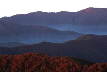 Forest Ranges. by WildWassa