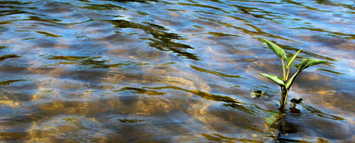 .:Alone In The Ripples:. by Shadouge4eva