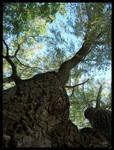 Dark Tree by kentuski
