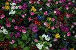 flowers by binarymind