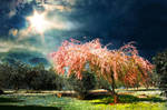 Spring by binarymind