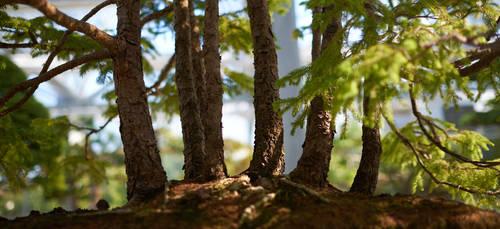 Bonzai-forest by binarymind