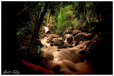 Mt Tamborine Curtis Falls by jaydoncabe