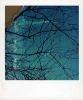 Polaroid Tree by lloydhughes