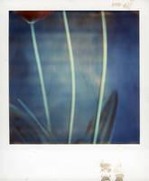 Tulip 3 by lloydhughes