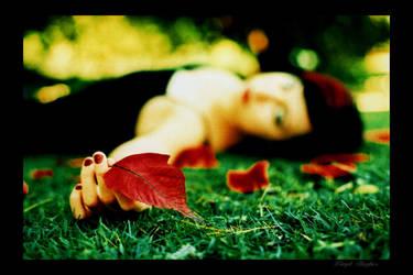 leaves seven by lloydhughes