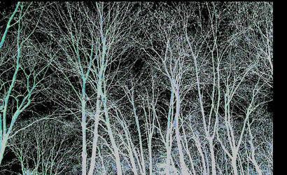 dark wood by flagnoir