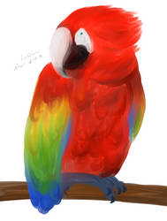 Macaw by cathartic-dream
