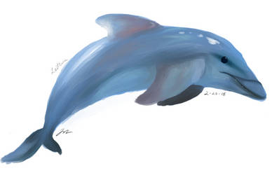 Dolphin by cathartic-dream
