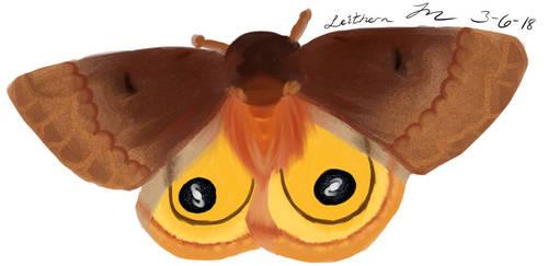 Io Moth by cathartic-dream