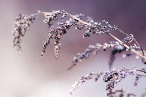Winter beauties by thenSir
