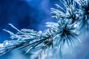 Winter Beauties 3 by thenSir