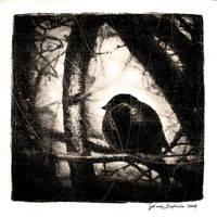 winterbird. by Sol-Angelica