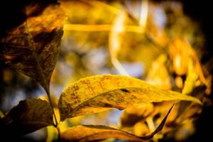 Autumn... [2] by Avrelium