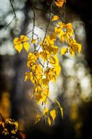 Autumn... [3] by Avrelium