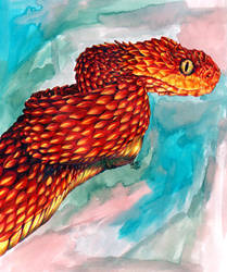 Red African Viper by LuckyEd