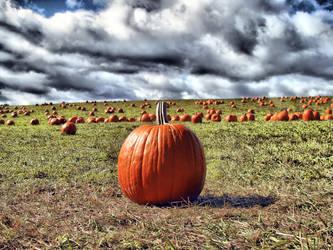perfect pumpkin by heatherspettals