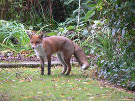 no name fox by kram666
