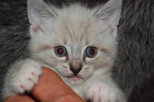 Kitty2 by suuzz870