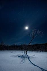 Full moon fever.. by uberfischer