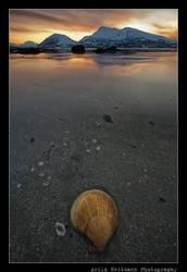 Shellscape... by uberfischer