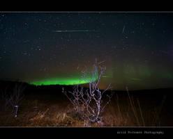 Aurora meets the Leonids by uberfischer