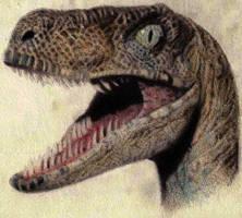 Age-12 Raptor by L-Spiro