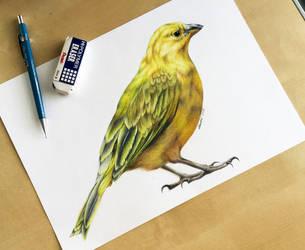 Hyperrealism Bird Test by Artistlizard101