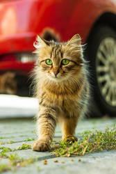 Cat n Red by kavsikuzah