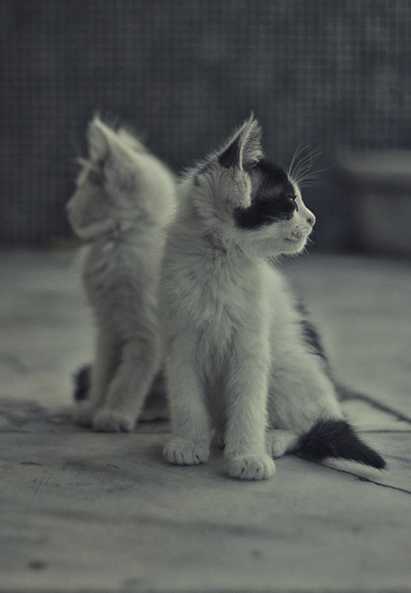 Spy Kitties by kavsikuzah