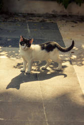 Grow Up Kitty by kavsikuzah