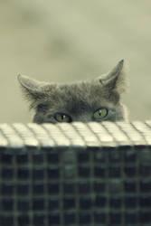 Big Cat Watch Us by kavsikuzah