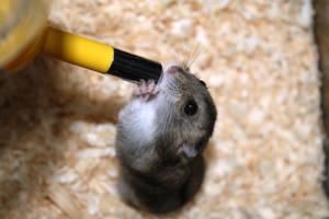 Hamster by JOEIAN