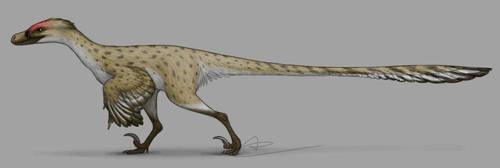 Velociraptor by Birvan