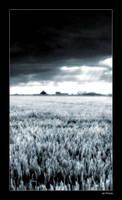 Field by pdon