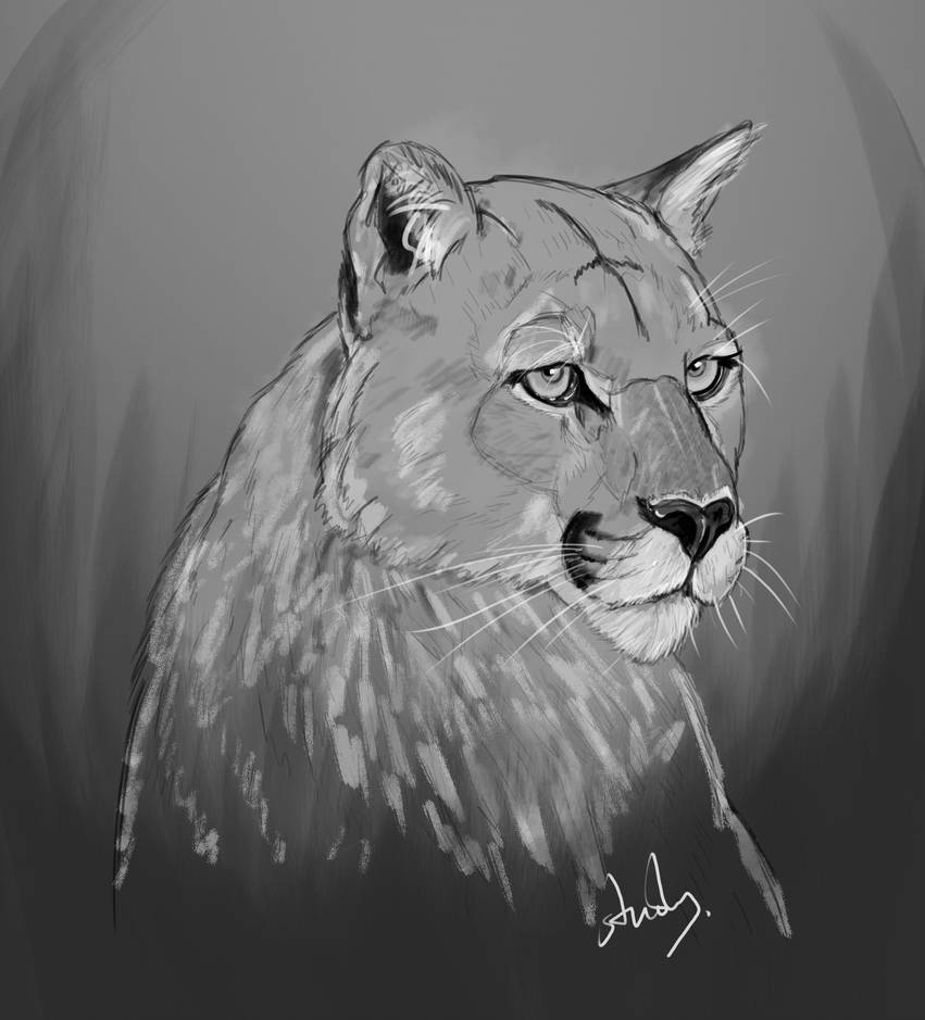Daily Study145a by petro66
