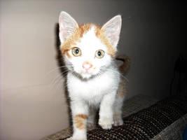 My kitten by Georgya10