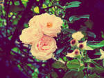 vintage roses by Seraphoid