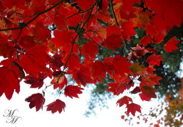 Fall Burns Red by mmubeen