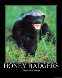Honey Badgers by dave97