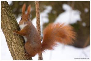 Snow Patrol by squirrelhollow