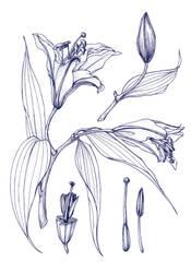 Botanical Dissection by bigredsharks