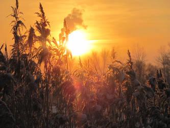 Sunfall in grass by elona-spot