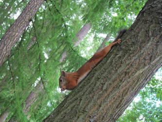 Acrobatic squirrel by elona-spot
