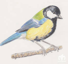 Great Tit by Serial-Painter