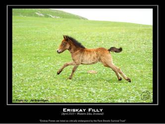 Eriskay Filly by tuatha-isles